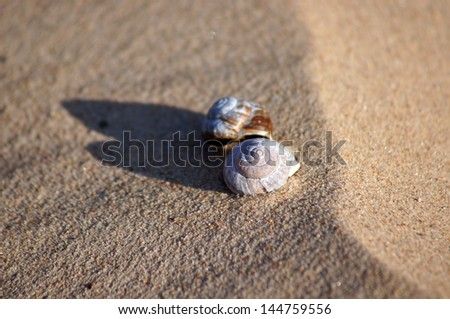 Still life shells on the sand.