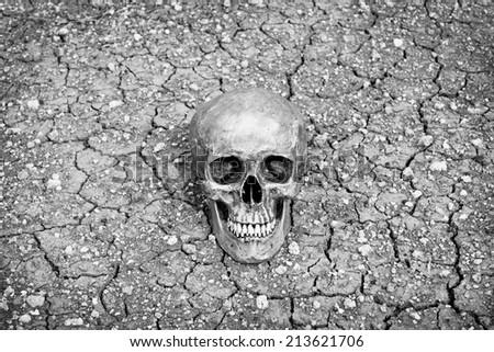 still life skull human on cracks dry ground in black and white filter effect. - stock photo