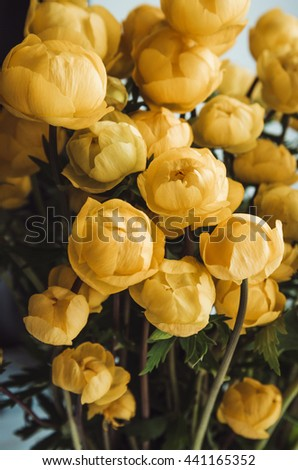 Still life with a fresh summer bouquet of yellow roses flowers on dark background. Cozy home rustic style decor. Village gardening. Tonal correction filter instagram effect - stock photo