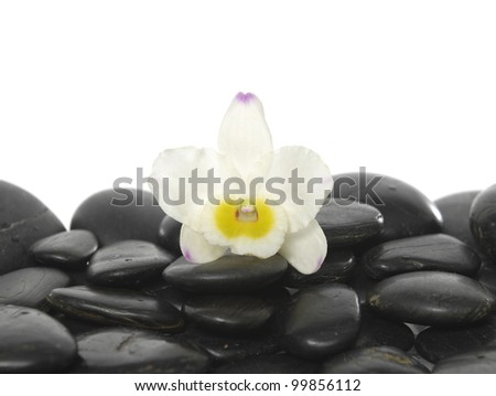 Still life with beautiful orchid on wet stones