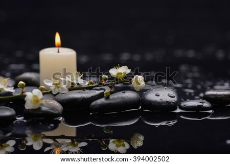 Still life with branch cherry blossom with white candle on black stones - stock photo