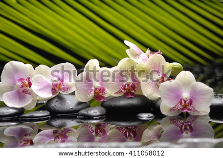 Still life with branch orchid with black stones with green plant - stock photo