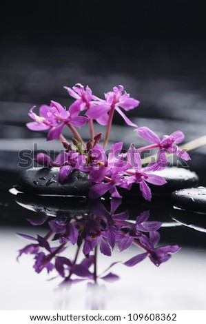 Still life with branch pink orchid with black stones