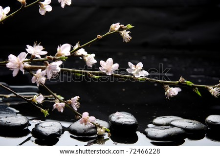 Still life with branch spring pink cherry flower - stock photo