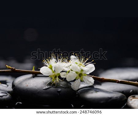 Still life with branch tropical flower with therapy stones - stock photo