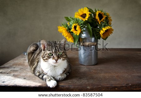 Still Life with Cat and bouquet of Sunflowers in Milk Can