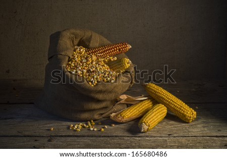 still life with corn - stock photo