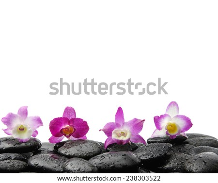 Still life with four orchid on wet zen stones  - stock photo