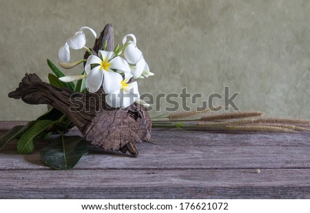 still life with Frangipani flower (Plumeria) - stock photo