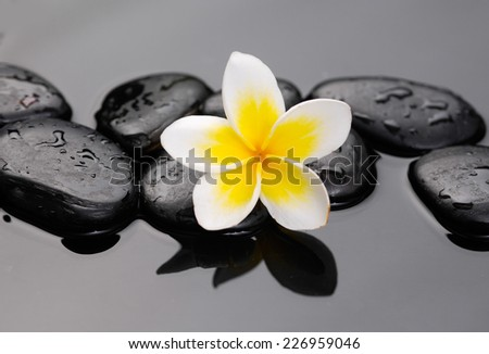 Still life with frangipani flowers on wet pebbles  - stock photo
