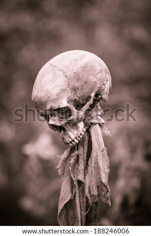 Still life with human skull on wooden stick with rugs - stock photo