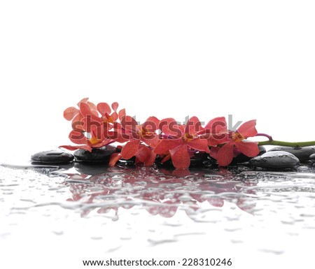 Still life with Lying down branch orchid with pebbles stones  - stock photo