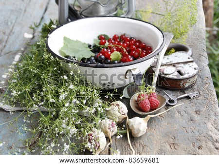 Still life with medicinal plants - stock photo