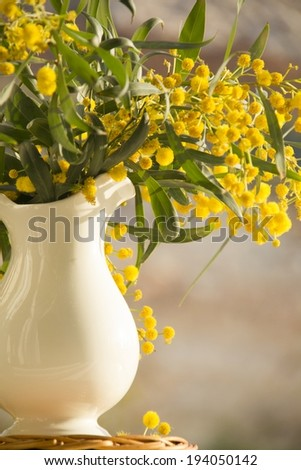 Still life with mimosa flowers in the jug  on the window  - stock photo