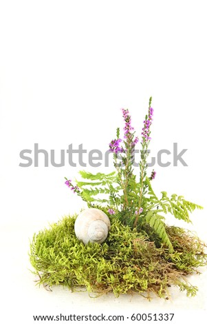 Still life with moss, fern, heather and shell of snail on white background - stock photo