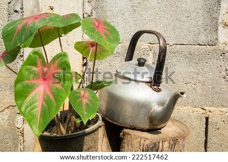 still life with old classic kettle on log with green leaves