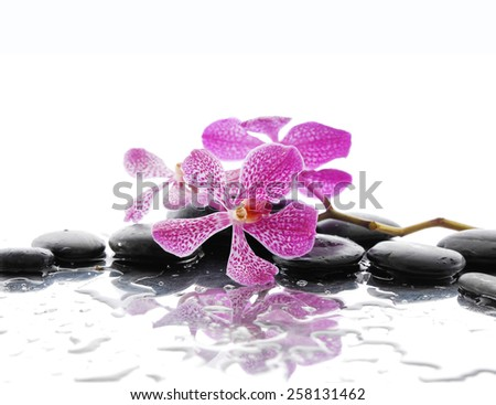 Still life with palm and wet stones with pink orchid   - stock photo