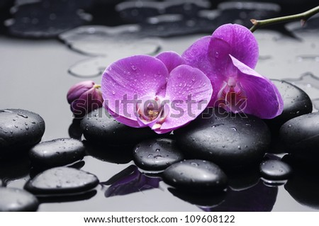 still life with pebbles and gorgeous orchid - stock photo