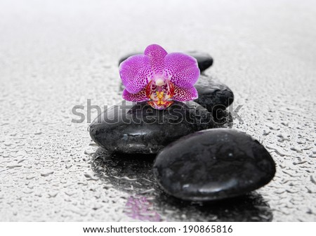 still life with pebbles and pink orchid