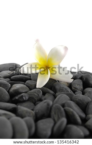 Still life with Plumeria flowers on stones background