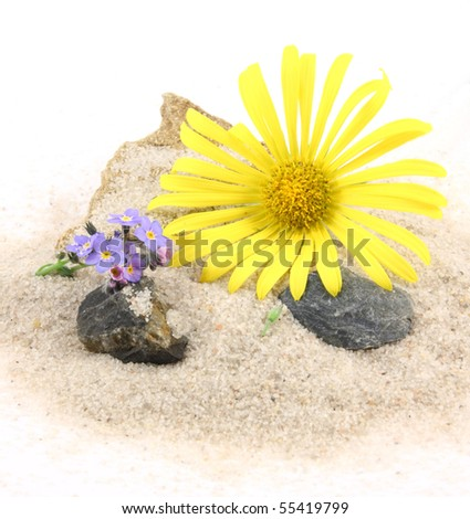 Still life with sand and flowers