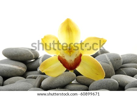 Still life with set of yellow orchid pebble