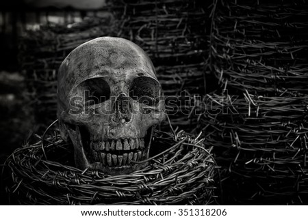 Still life with skull and barb wire
