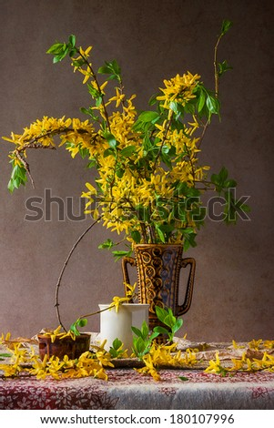 Still life with sprigs of flowering forsythia - stock photo