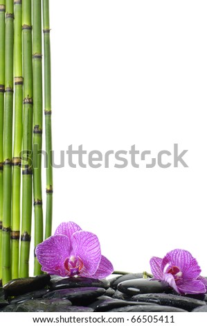 Still life with thin bamboo grove and pink orchid on pebble - stock photo