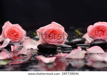 Still life with three rose ,petals and wet stones - stock photo