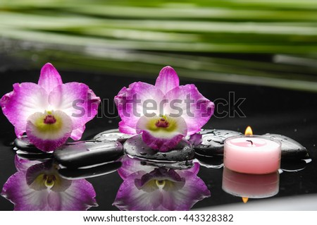 Still life with two orchid with black stones with,green plant - stock photo