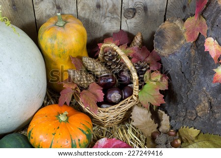 Still Life with Various Pumpkins, Wicker Basket Filled with Pinecones, Acorns, Chestnuts and Autumn Leaves on a Hay, Vintage Wooden Planks  Background  - stock photo