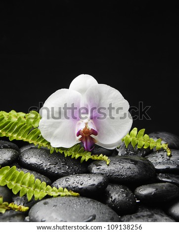 Still life with white orchid and stones with green fern - stock photo