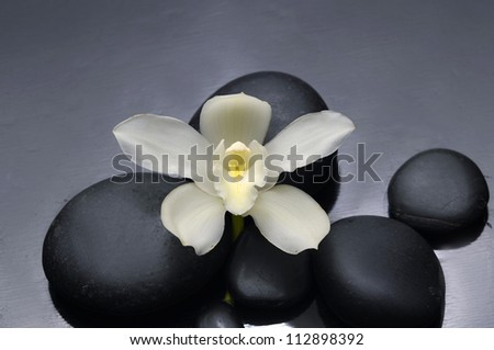 Still life with white orchid on pebble