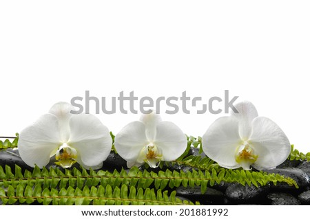 Still life with white orchid with green fern on pebbles - stock photo
