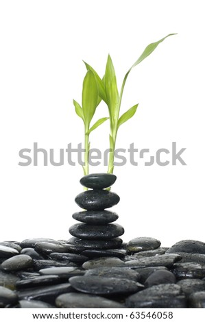 Still life with Zen stones and green plant
