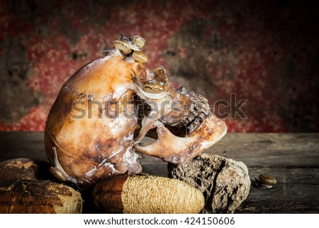 Still Life withe Human skull on wood and snails.