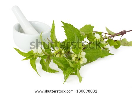 Stinging nettle with mortar and pestle isolated on white background - stock photo