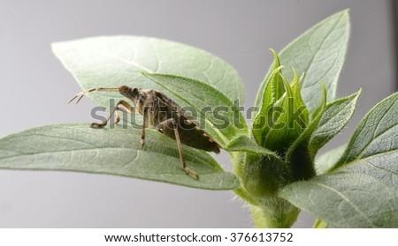 Stinkbug on a Plant - stock photo