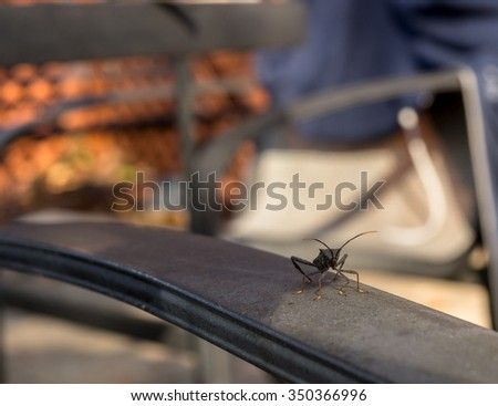 Stinkbug on armrest on the patio - stock photo