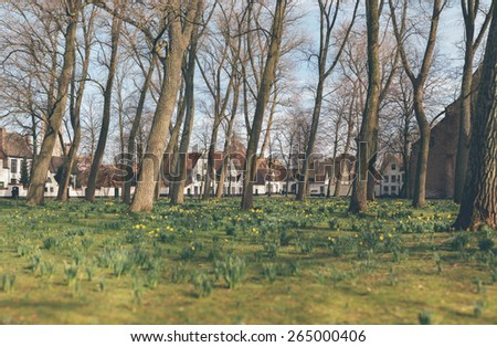 Stitched panorama of pretty spring flowers blooming in an urban park amongst leafless trees with a row of townhouses in the background - stock photo