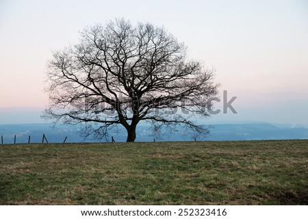 Stock image of a lonely old oak tree on the horizon in the evening - stock photo