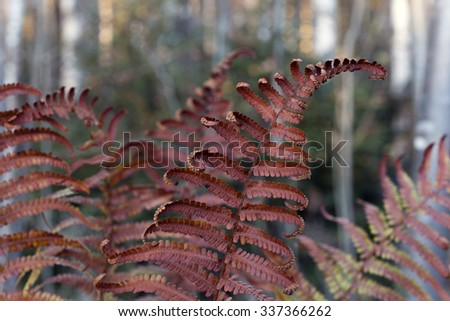 Stock image of dried brown fern leaves in forest at peaceful autumn evening.  - stock photo