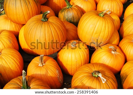 Stock image of pumpkin display during Harvest Festival in New England, USA  - stock photo