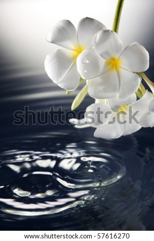 stock image of the spa concept - stock photo