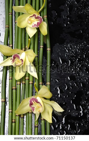 stock image of the spa concept -three orchid with bamboo grove on wet black background