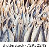 stockfish at the market - stock photo