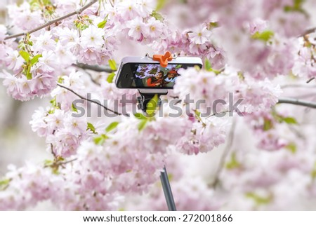 STOCKHOLM, SWEDEN - APRIL 22: Two Asian girls taking a selfie during the Cherry blooming with a sefie-stick. April 22, 2015 in Stockholm, Sweden. - stock photo