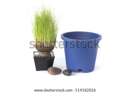 stone and Rice in pot. - stock photo
