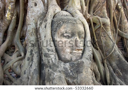Stone Budda head in the tree roots, Ayutthaya is old capital of Thailand.